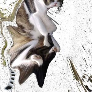 johnfleonard_gallery_cat